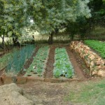 Generic garden2
