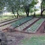 Generic garden3