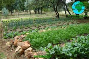 # Generic garden4