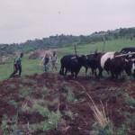 # Swaziland land preparation1