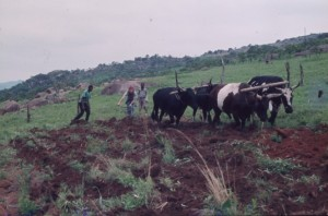 # Swaziland land preparation1