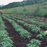 Swaziland land preparation3