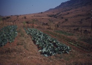 Swaziland rural food soverenity
